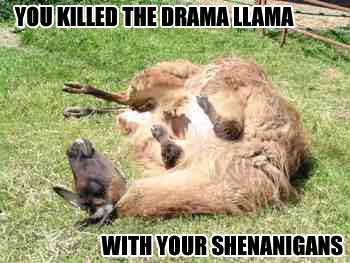 dead-llama.jpg